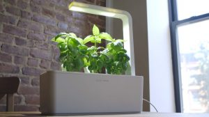 Click-&-Grow-A-Natural-Atmosphere